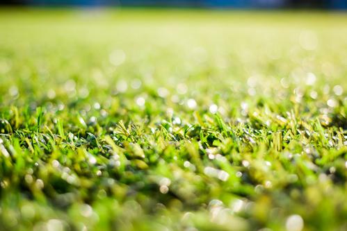 היבטים בבחירת דשא סינטטי לגינה